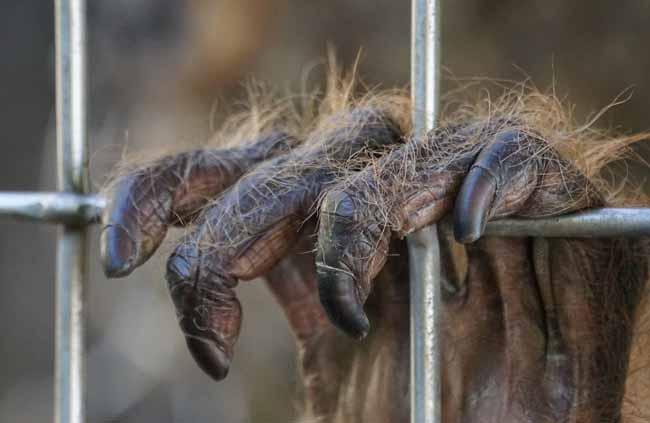 A Pony la capturaron y separaron de su madre de pequeña para prostituirla durante años