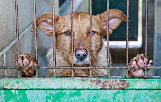 La Declaración Universal de los Derechos de los Animales se aprobó en 1978