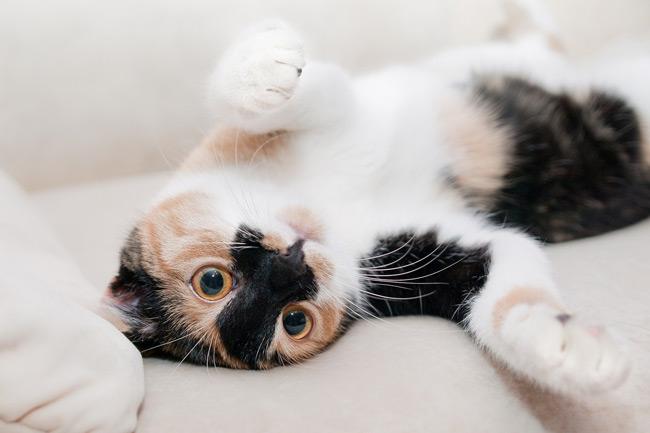 La curiosidad de los gatos genera escenas muy divertidas