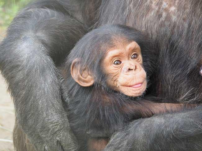 Bebé con su madre