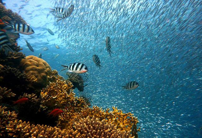 Han desaparecido la mitad de las extensiones de arrecifes de coral
