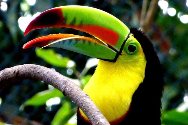 Colombia es el anfitrión para el Día del Medio Ambiente 2020