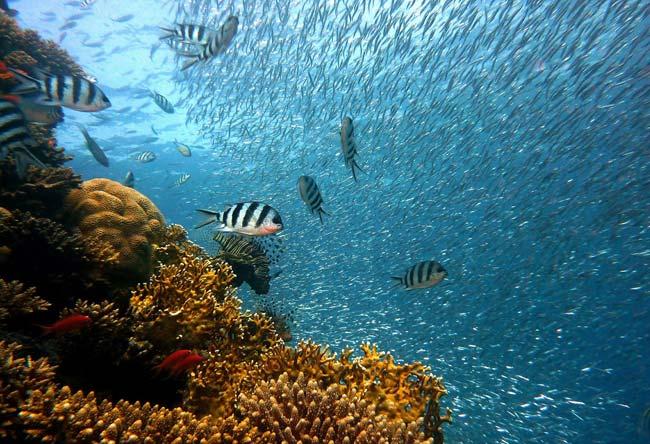 El océano es el gran pulmón del planeta
