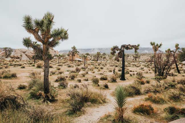 Hay desiertos naturales donde existe mucha biodiversidad y son sostenibles