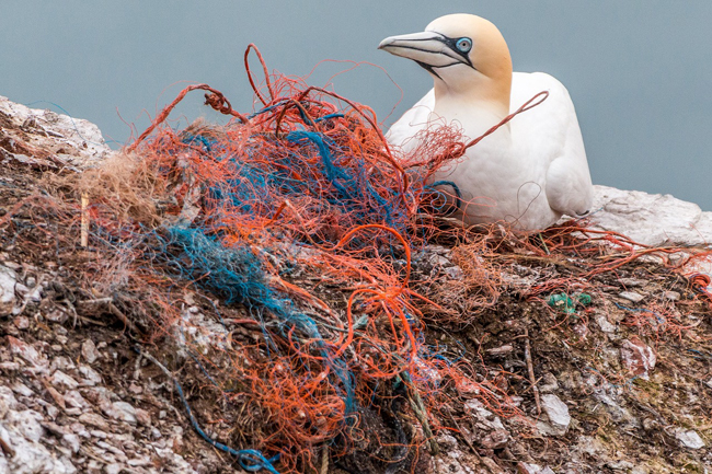 Cada año mueren 1 millón de aves marinas por los efectos del plástico